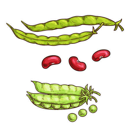 green bean: Green pea and bean vegetable sketch icons. Isolated open pea pod. Vegetarian fresh food product sign for sticker, grocery shop, farm store element