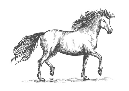 arabian horse: Arabian horse sketch of galloping purebred mare horse with raised legs and flowing mane and tail. Horse racing badge or equestrian dressage competition mascot design