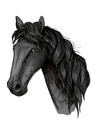 filly: Horse head sketch of arabian stallion. Black racehorse for equestrian sport badge, horse racing symbol or t-shirt print design Illustration