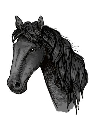 Horse head sketch of arabian stallion. Black racehorse for equestrian sport badge, horse racing symbol or t-shirt print design Illustration