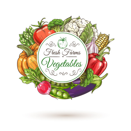green pepper: Fresh farm vegetables round badge, encircled by sketched tomato, bell pepper, eggplant, radish, broccoli, pumpkin, green pea, corn, asparagus and cauliflower