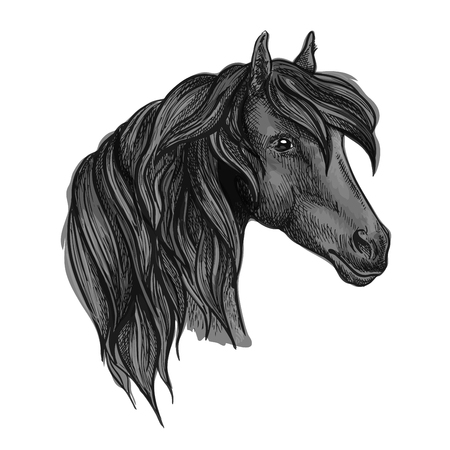 racehorse: Purebred horse head sketch. Black racehorse of arabian breed. Powerful stallion for horse racing symbol or equestrian sporting themes design