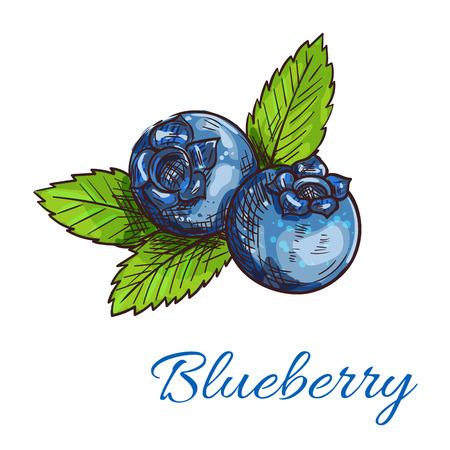 Blueberry fruit geïsoleerd schets. Gezonde natuurlijke blauwe bessen wilde blauwe bosbessen met groene bladeren voor de biologische landbouw embleem, vegetarische fruitig dessert of sap packaging design Stock Illustratie