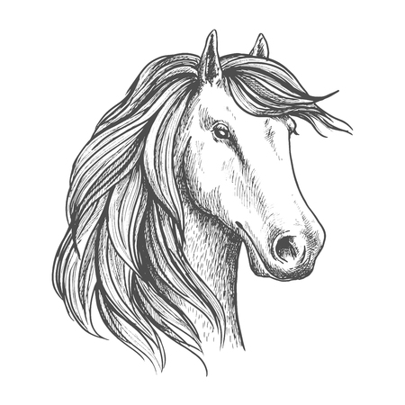 racehorse: Arabian mare horse isolated sketch. Purebred racehorse head for equestrian sporting competition or horse racing symbol, t-shirt print design