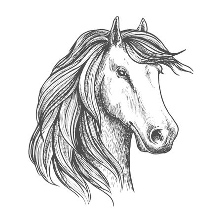 Cheval jument arabe isolé croquis. tête de cheval de course pur-sang pour la compétition sportive équestre ou à cheval symbole de course, t-shirt imprimé Banque d'images - 64252964