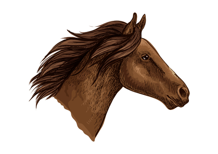 filly: Brown horse head isolated sketch of running racehorse. Purebred arabian stallion for horse racing symbol, equestrian sport themes design Illustration