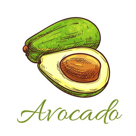 salad: Avocado fruit sketch. Ripe green avocado cut in half isolated icon. Vegetarian salad recipe, healthy food themes design