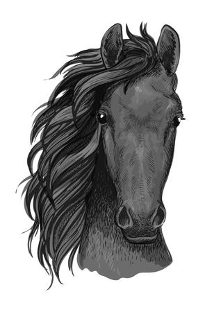 Graues Pferd Skizze der arabischen Hengst Kopf mit dem muskulösen Hals. Pferderennen Maskottchen, Reitclub Symbol oder T-Shirt mit Print-Design Standard-Bild - 64253236