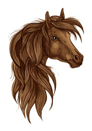 arabian horse: Arabian horse head sketch. Brown stallion horse of arabian breed. Horse racing sign, equestrian sporting competition theme design Illustration