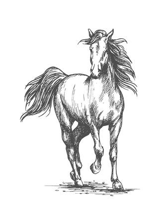 gait: White horse running free gait.