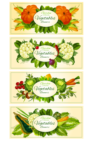 peper: Farm and garden vegetables vector banners. Vegetarian vegetable products. Pumpkin and corn, cauliflower, radish, peper, onion and tomato, olives, carrot and cabbage, lemon and mushroom, leek and radish. Background for grocery store, food market Illustration