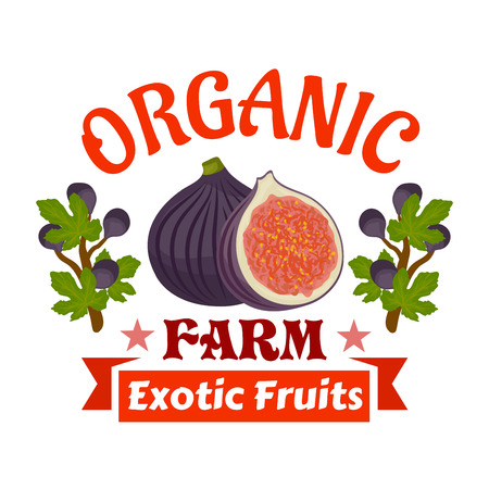 fig: Figs. Farm organic exotic fruits emblem. Vector icon of whole and half cut fig fruit with fig tree branches. Label for vegetarian product sticker, grocery farm store Illustration