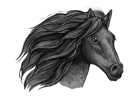 black hairs: Black raven stallion running against wind. Sketched vector portrait of horse head with proud look and waving mane hairs