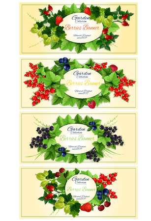currants: Garden berries fruits banners. Vector design of garden berry with leaves strawberry, dog-rose fruits, red currant, blackcurrant, strawberry, gooseberry