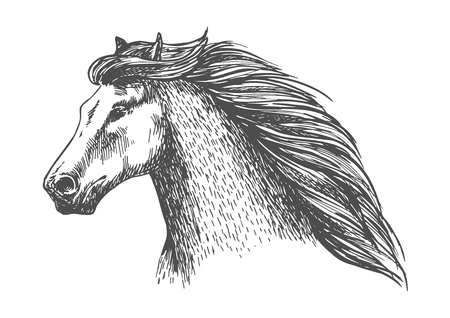 mane: Raging gray horse free running. Vector sketch portrait of beautiful mare on sport races with noble look and thick wavy mane Illustration