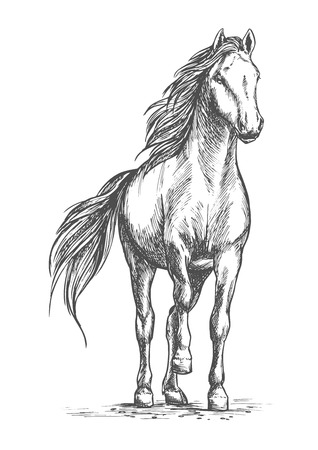 hoofed: Sketched vector portrait of horse. White mare horse pacing with lifted front hoof. Wild mustang stallion ready for racing sport competition Illustration