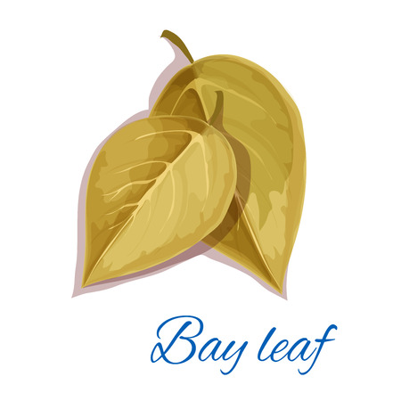isolated ingredient: Bay leaf icon with text. Vector isolated emblem of bay leaves herb cooking ingredient for decoration, package design element, sticker, label