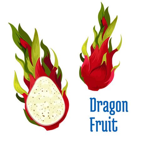 exotic fruit: Exotic tropical dragon fruit icon. Illustration