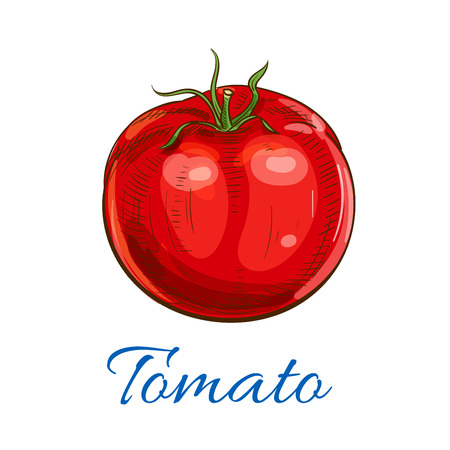 fresh vegetable: Tomato. Fresh ripe red whole tomato vegetable with leaves. Vector sketch icon. Farm garden vegetarian isolated product element for grocery shop design, tomato ketchup emblem
