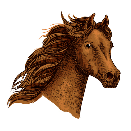 Arabian beautiful brown horse head. Emblem or team icon for sport races or equine industry. Powerful and proud bay mustang with noble look and strong neck