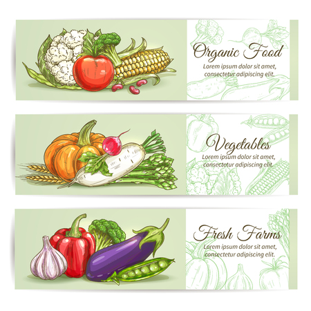 fresh vegetable: Organic fresh farm vegetables. Vector sketch cauliflower, broccoli, corn, tomato, pumpkin, daikon radish, asparagus, wheat, garlic, eggplant, pepper pea Vegetarian vegetable products design for grocery store food market