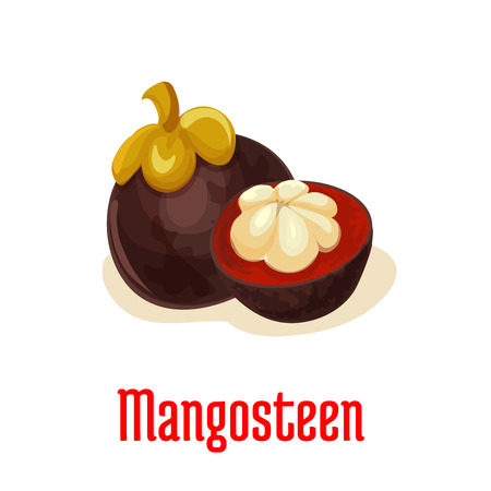 Mangosteen. Vector isolated exotic tropical mangosteen fruit icon. Whole and peeled half juicy and sweet fruit with seeds