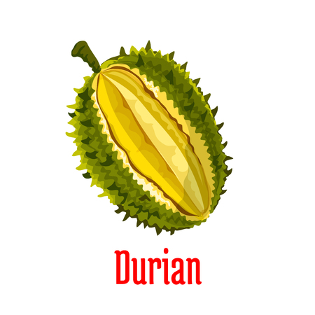 pulp: Durian. Vector isolated exotic tropical durian fruit icon. Durio slice cut along with fresh juicy unusual tasty pulp