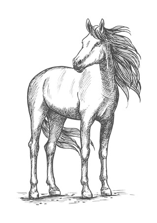 racehorse: White horse sketch portrait. Wild mustang standing with turned head and looking aside. Vector racehorse with calm look and wind in waving mane