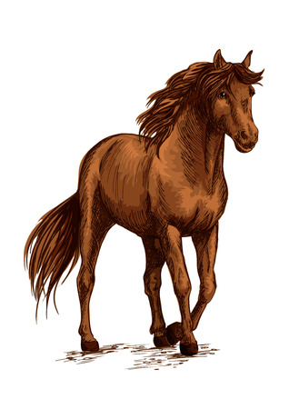 Brown horse pacing calm in wild. Beautiful bay mare with glossy shining horse hair and waving mane. Modest stallion bending front hoof. Vector color sketch portrait Illustration