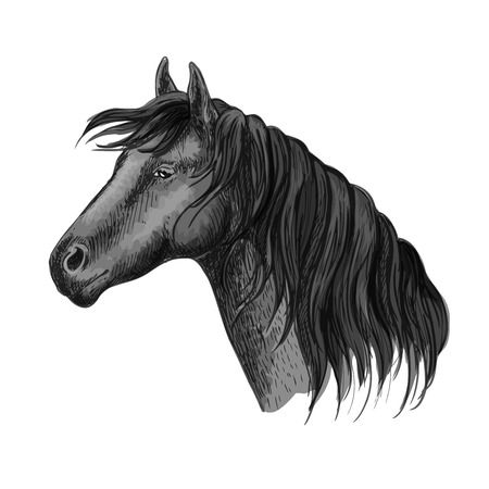 humble: Horse head portrait. Humble black mustang with kind eyes. Raven mustang stallion sketch Illustration