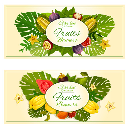 rambutan: Tropical garden fruits banners with vector carambola, mangosteen, durian, figs, guava, rambutan and tropical plant palm leaves elements. Fruit decoration placards Illustration