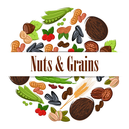 nutritious: Nutritious nuts and grains in round shape emblem. Natural coconut, almond, pistachio, cashew, hazelnut, walnut, bean pod, peanut, sunflower, pumpkin seeds. Vegetarian healthy nutritious raw food banner, sticker design