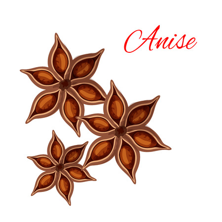 isolated ingredient: Anise. Vector isolated icon of spice plant anise, aniseed. Aroma food ingredient, condiment emblem for anise spice packaging design, cuisine menu card decoration, grocery shop, food market tag Illustration