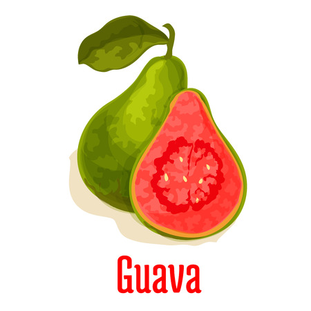 Guava. Fresh juicy exotic tropical fruit. Vector isolated icon of whole and half cut guava fruit with pink pulp. Emblem for fruit shop, drink product label, menu card design element