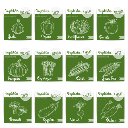 fresh vegetable: Vegetables. Fresh organic natural farm vegetable products. Chalk sketch icons on blackboard background for vegetarian restaurant menu, shop label stickers. Garlic, pepper, cauliflower, tomato, pumpkin, asparagus, corn, broccoli, daikon radish