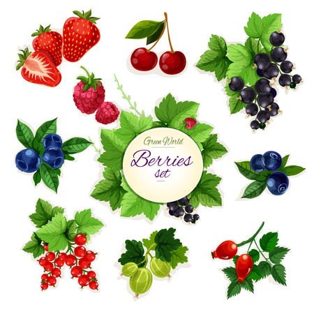 Berries. Isolated berry icons of cherry, strawberry, raspberry, black currant, red currant, blueberry, blueberry, gooseberry, dog-rose berry fruit. Farm and garden fresh berry bunch and cluster symbols Illustration