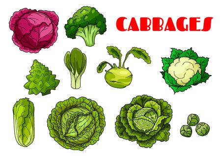 repollo: iconos aislados de los vegetales de hoja de col Vectores