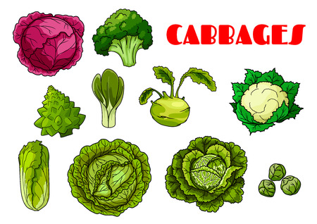 cabbage: Isolated icons of cabbage leafy vegetables Illustration