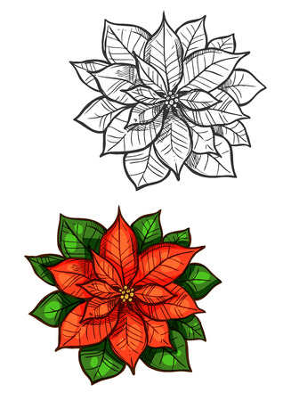 new plant: Christmas star flower vector sketch. Traditional new year decoration red poinsettia plant with green leaves