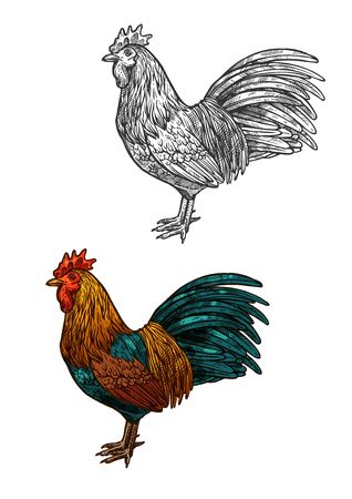 lunar calendar: Rooster vector color sketch isolated icon. Symbol of New Year 2017 and Christmas. Lunar calendar zodiac of Red Rooster Cock