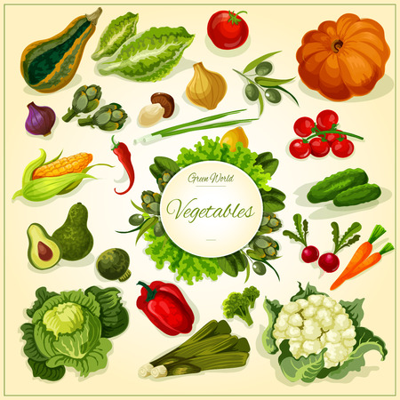 basil: Fresh vegetable poster with tomato and pepper, carrot, broccoli, olive, onion, mushroom and chilli, cucumber and cabbage, lettuce, pumpkin and corn, radish and salads. Food design