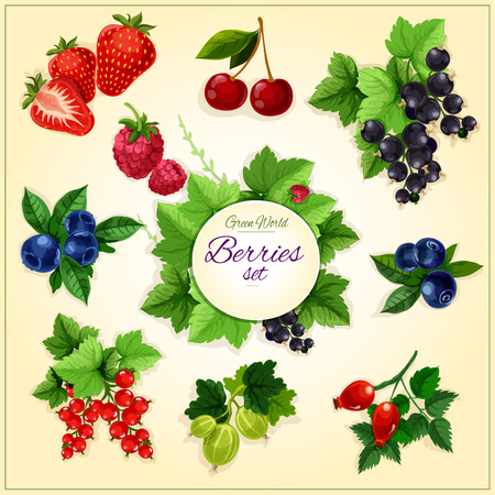 berries: Berry and fruit cartoon poster with sweet strawberry, cherry, blueberry, raspberry, black and red currant, bilberry, gooseberry and briar berries. Food, juice, fruit dessert design