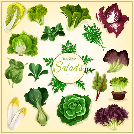 Salad leaf and vegetable greens poster with fresh healthy lettuce, chinese cabbage, spinach and bok choy, cress salad, iceberg lettuce and arugula, chicory and corn salad, batavia, radicchio and chard, sorrel Illusztráció