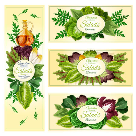 leaf lettuce: Salad leaf and vegetable greens banner of leafy frames with lettuce, spinach and chinese cabbage, arugula and iceberg lettuce, cress salad and bok choy, sorrel and chard, chicory, radicchio, batavia, corn salad