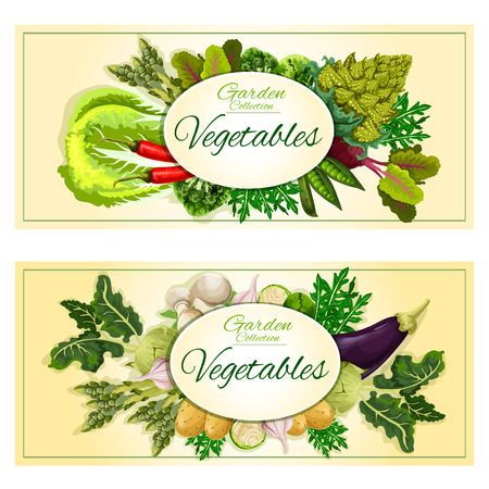 Healthy vegetable and salad leaf banner set with chilli pepper, cabbage and mushroom, garlic and eggplant, potato, beet, broccoli and brussel sprout, romanesco cauliflower, pea, kohlrabi, arugula, asparagus