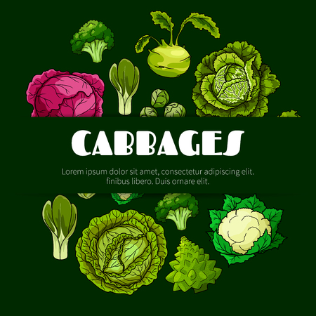 cabbage: Cabbage vegetable poster with fresh green and red head cabbage, broccoli, cauliflower, kohlrabi, brussel sprout, romanesco cauliflower and bok choy. Vegetarian food, dieting, salad recipe design