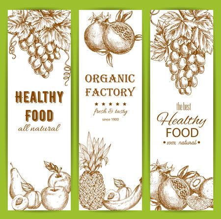 sliced: Healthy fruit food banners set. Vector sketch of natural organic fruits grape bunch, pomegranate, apple, apricot, pear, pineapple, banana, orange, citrus lemon, kiwi Illustration