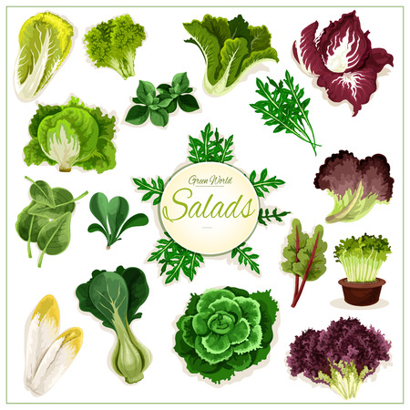 Salad greens poster of leafy vegetables. Vector isolated vegetarian arugula, chicory salad, spinach, lollo rossa, radicchio, swiss chard salad, batavia lettuce, gotukola, mangold, kale, collard, romaine, pak choi, sorrel