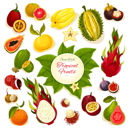 Tropical fruits poster of vector exotic whole and sliced juicy fruits durian, carambola, dragon fruit, guava, lychee, feijoa, passion fruit maracuya, figs, rambutan, mangosteen, orange, papaya, blood orange, longan