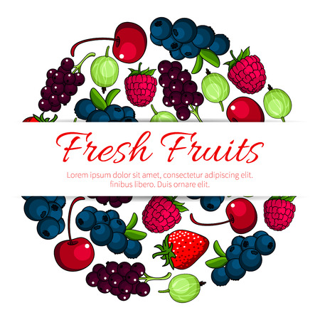 Fruits and berries. Vector poster of fresh juicy forest and garden strawberry, raspberry, cherry, blackcurrant, redcurrant, blueberry, gooseberry Illustration